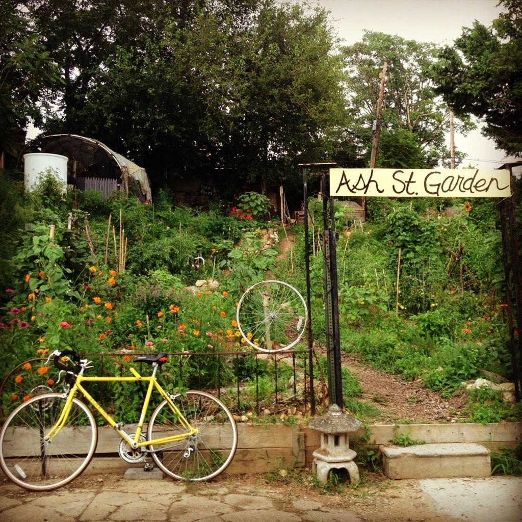 Ash St Garden