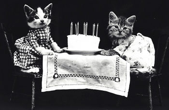 grief and cake: two cats eating birthday cake